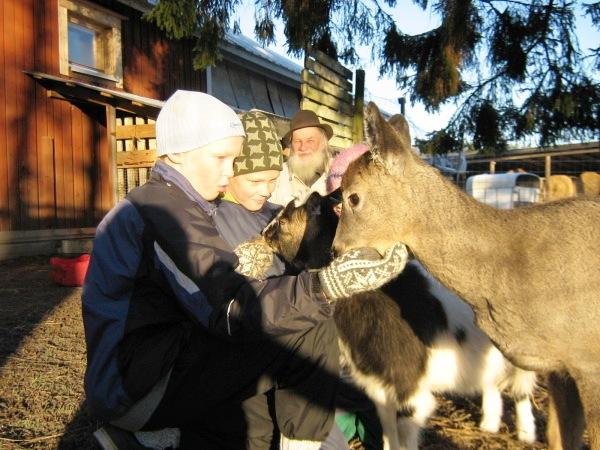 Ферма домашних животных Kannisto