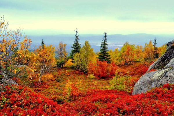 Характерное отличие финской осени – яркие краски, вкусные ягоды и большие грибы