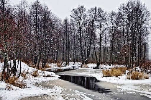 Ноябрь в Финляндии предвещает наступление холодов