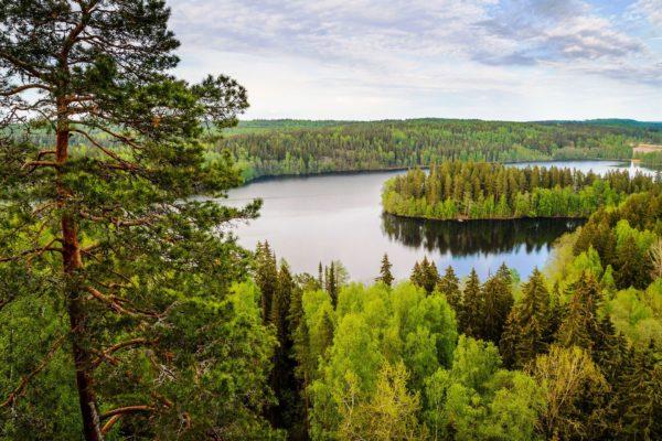 В последующие три тысячелетия здесь преобладали лесные ландшафты